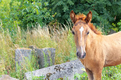 Horse on the Old Jewish cementery Royalty Free Stock Image