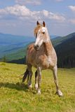 Horse On A Hillside. Royalty Free Stock Images