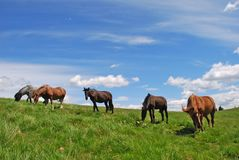Horse On A Hillside Stock Photo