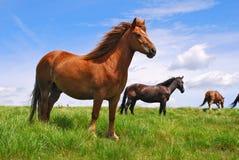 Horse On A Hillside Stock Photos