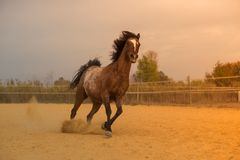 Free Horse On Nature. Portrait Of A Horse, Brown Horse Royalty Free Stock Photo - 101386635