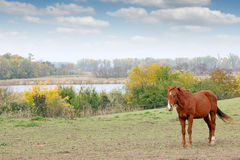 Free Horse On Pasture Autumn Season Stock Image - 79720231