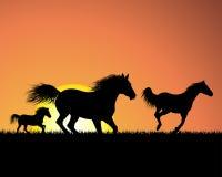 Horse On Sunset Background Royalty Free Stock Photography
