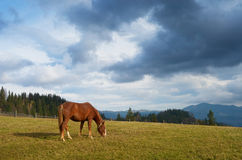 Free Horse On The Pasture Royalty Free Stock Image - 50914936