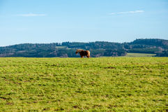 Horse in one fields Stock Photos