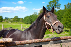 Horse in open-air cage Royalty Free Stock Photography