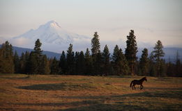 Horse and Oregon Mountain Scenery Royalty Free Stock Photography