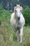 Horse outdoors Stock Images