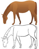 Horse outline and color Royalty Free Stock Image
