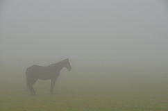 Horse outline in heavy fog Royalty Free Stock Image