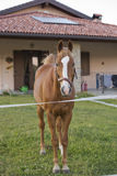 Horse outside the house Royalty Free Stock Photos
