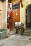 Horse outside a shop in the old medina of Fez, Morocco Stock Photography