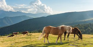 Horse over Dolomite landscape Geisler Odle mountain Dolomites Group Val di Funes royalty free stock photo