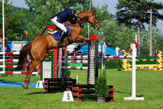 Horse over hurdle Stock Photography