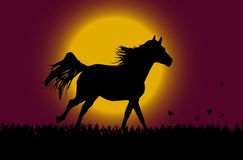 Horse over sunrise. Horse over sunrise with flying butterflies over grass stock illustration