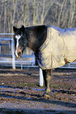 Horse in overcoat Royalty Free Stock Photos