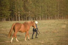 Horse with owner in the field Stock Image