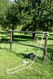 Horse paddock. Wooden fence, halter and bucket stock image