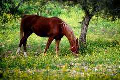 Horse in Paddock Stock Photography
