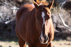 Horse in paddock. Horse patiently standing in a paddock Stock Photo