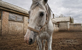 Horse in the paddock Royalty Free Stock Images