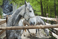 Horse in paddock Stock Photo