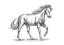 Horse in paddock isolated sketch for equine design Royalty Free Stock Image