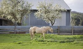 Horse in Paddock Stock Image