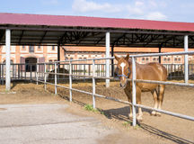 Horse in paddock Royalty Free Stock Images