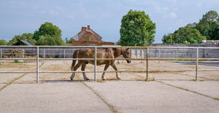 Horse in paddock Royalty Free Stock Photography