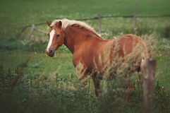 Horse in the paddock Royalty Free Stock Image