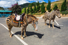 Horse are painted like a zebra in Vietnam. Royalty Free Stock Photography