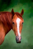 Horse Painting. Painting of a quarter horse on a green background Stock Image
