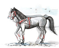 Horse. Painting of beautiful young horse Stock Image