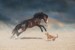 Horse paly with dog