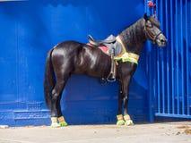 Horse Parade. Carnival Horse Parade -Views around Curacao a Caribbean Island Stock Images