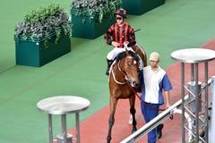 Horse Parade Ring show in Hongkong Jockey Club Royalty Free Stock Photography