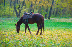 Horse in park Royalty Free Stock Image