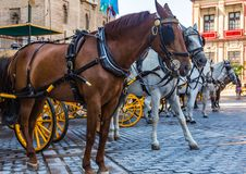 Horse parking with carts on the central square in Seville, Spain.  royalty free stock images