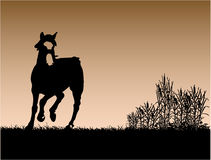 Horse Passion. Work with vectors,illustration Stock Photography