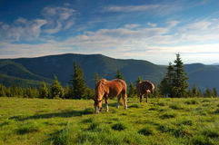 Horse on a pasture. Horse are in mountains, summer landscape stock image