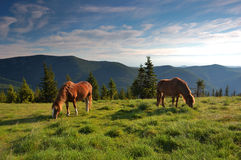 Horse on a pasture. Horse are in mountains, summer landscape Royalty Free Stock Images