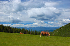Horse on a pasture. Horse are in mountains, summer landscape Royalty Free Stock Photo