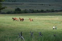 Horse Pasture. Two men round up a group of horses from a field Royalty Free Stock Photos