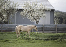 Horse in pasture Royalty Free Stock Photography