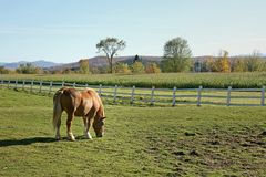 Horse in a pasture Stock Photos