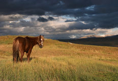 Horse at a pasture Stock Photography