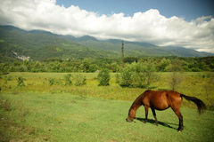 Horse on the pasture Royalty Free Stock Photos