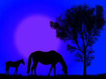 Horse pasture Royalty Free Stock Images