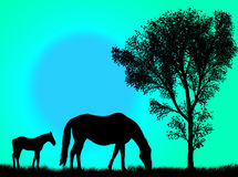 Horse pasture Stock Photos